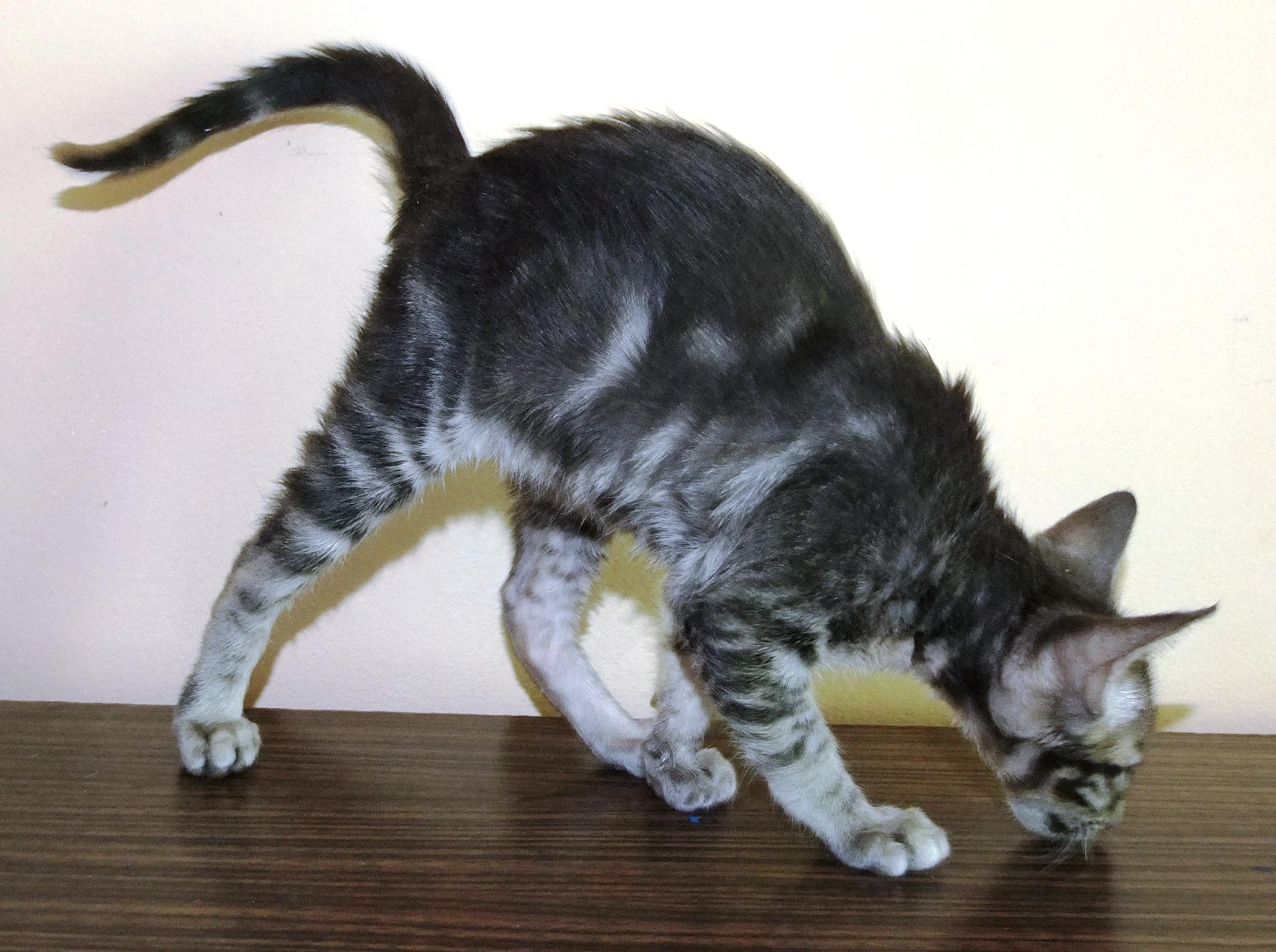 Narod ru кошки